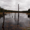 View from one of the many beaver dams.   In fall they were all easy to cross.