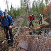 Who would ever expect a treefall on a beaver dam?  Well here is one.