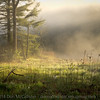 Swift River and morning fog, #5