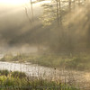 Swift River and morning fog, #2