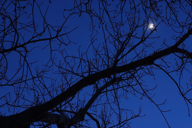 Moon for the Branches