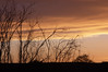 My standard test sunset photo. This one for the Sears 135mm Macro.