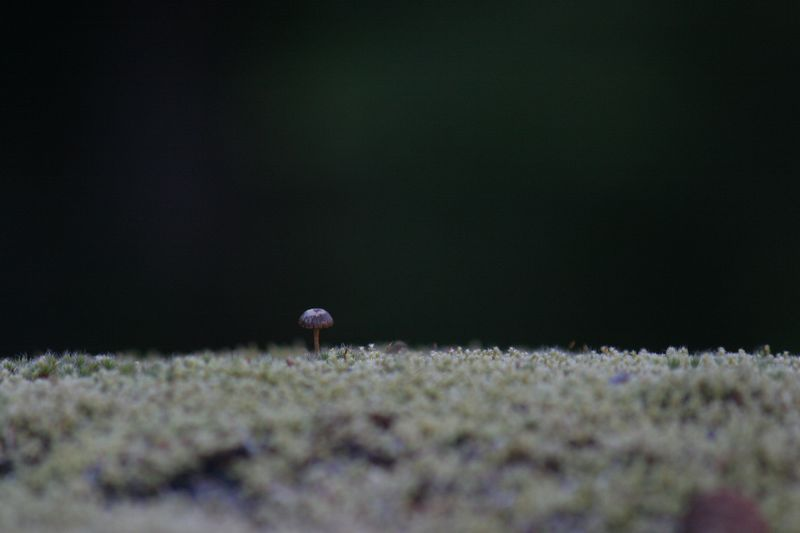 Different mushroom, same moss.