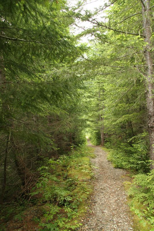 "Typical section of ""trail"" along the old logging road"