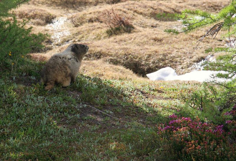 A friendly marmot pays us a visit.