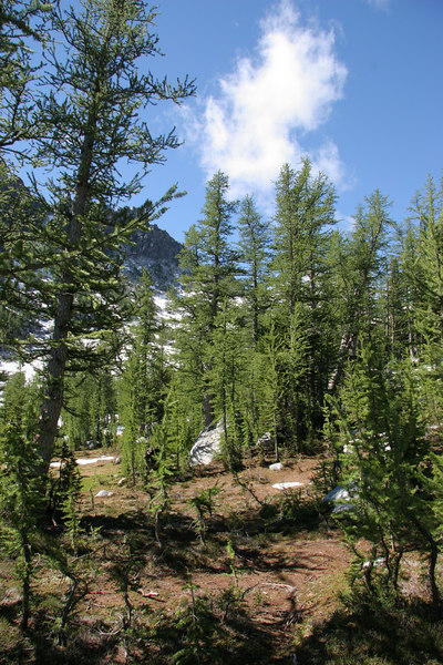 Talk to anyone who's done a high alpine hike with me, and they'll tell you I have this thing for larch trees.  Here are a bunch of them near the south end of Shield Lake.