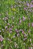 Nice wildflowers...