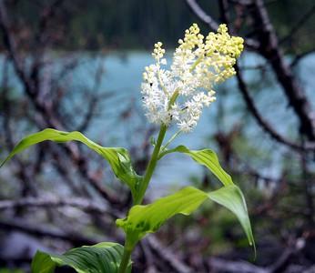 036 - Wildflowers