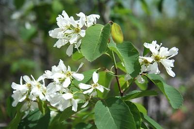 033 - Wildflowers
