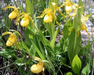 034 - Wildflowers