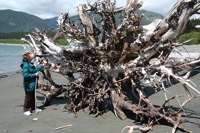 031 - Driftwood