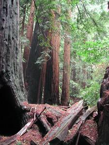 2002-24-Muir Woods