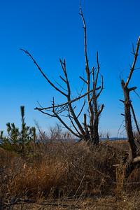 Hammonasset -- Tree against Blue Sky