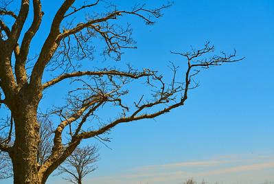 Tree Limbs in the Sun