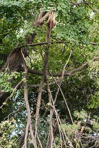 Broken Tree -- Tornado Did This!