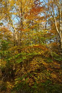 Foliage along Canal Trail