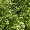 Aiken Branch Cascading Falls, NC near Deals gap, best seen in the winter.  Road side view.
