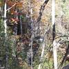 Miuki Falls, SC