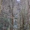 Melrose Mtn. Falls, NC