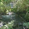 Verilie Falls, NC