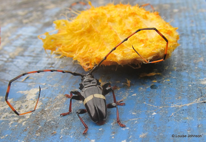 Beautiful bug and the remnants of my mango - Tobago