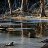 Reflections on a frozen beaver pond