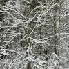 Winter's edge #2