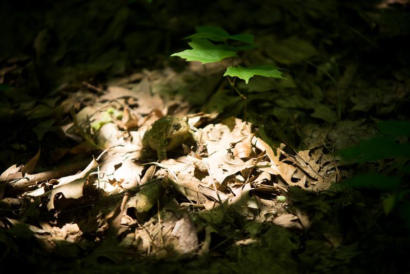 Suntanning Frog