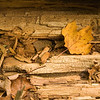 Autumn Leaf on Log
