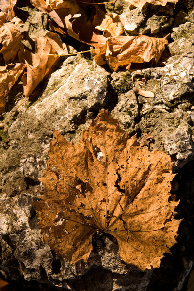 Autumn Leaf on Rocks