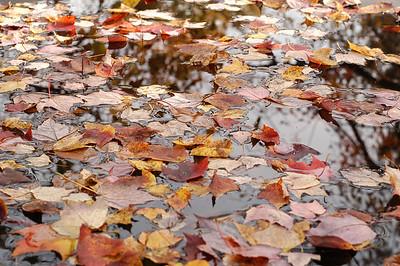 leaves_on_water_0026