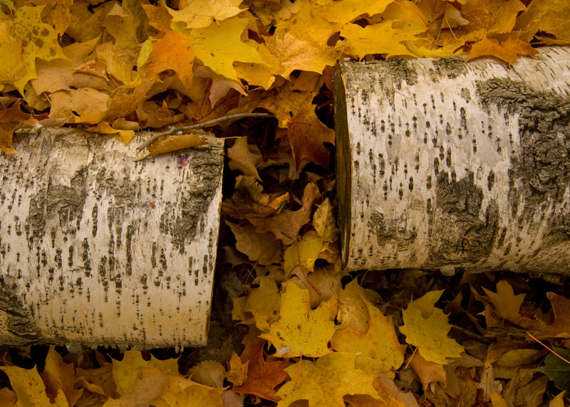 Split Birch
