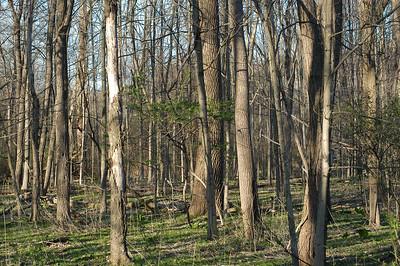 trees_0076