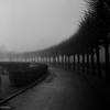 January Fog