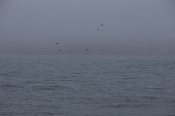 Long Island-345