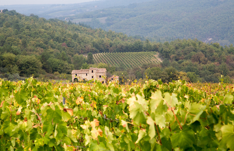 Farmhouse between vineyards in the Chianti region of Tuscany, Italy