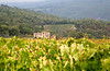 Farmhouse between vineyards in the Chianti region of Tuscany, Italy