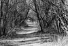 Trail to Fairbank Cemetary
