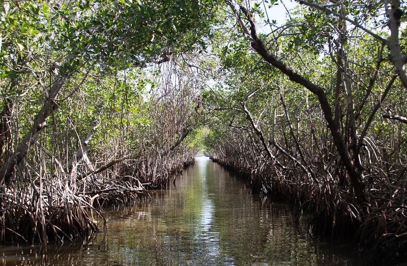 Mangrove Tunnel, Everglades