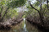 Mangrove Tunnel, Everglades