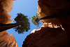 """Wall Street"" Bryce Canyon National Park, UT"