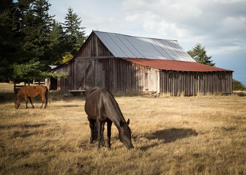 Horses at 1890 barn on Orcas Island, WA