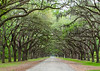 Driveway to Wormsloe Ruins, near Savannah, GA