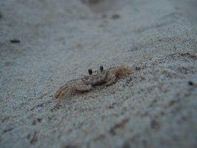 Snow Crab Macro
