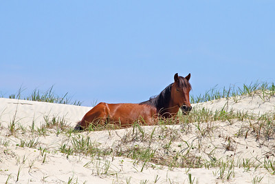 Outer Banks Animals