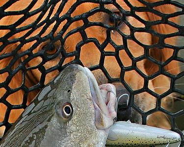 Fishing Dreams