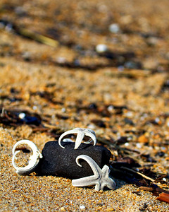 3 starfish