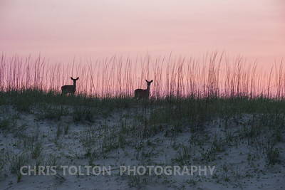 MORNING WALK NEAR HATTERAS LIGHT