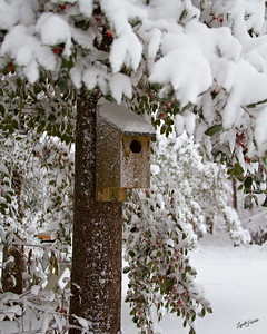 Bird House in the snow300
