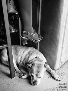 © Lorraine Shannon